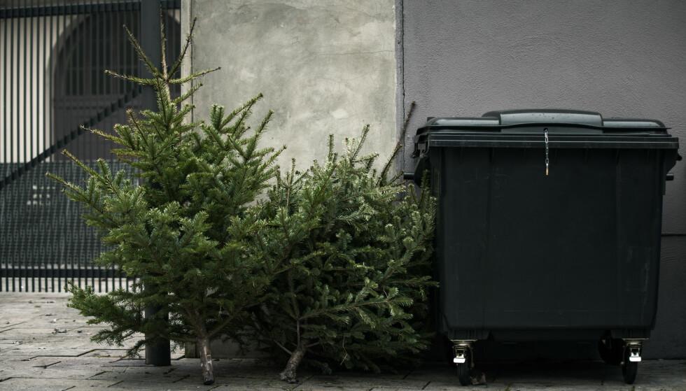HENTES: I noen kommuner slipper du å frakte juletreet selv. Foto: Shutterstock/NTB