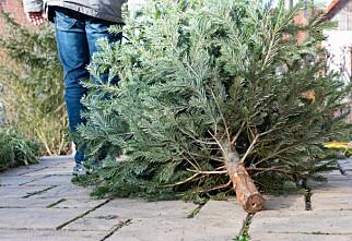 Når skal juletreet ut?