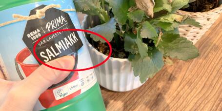 Hvordan bli kvitt blomsterfluer