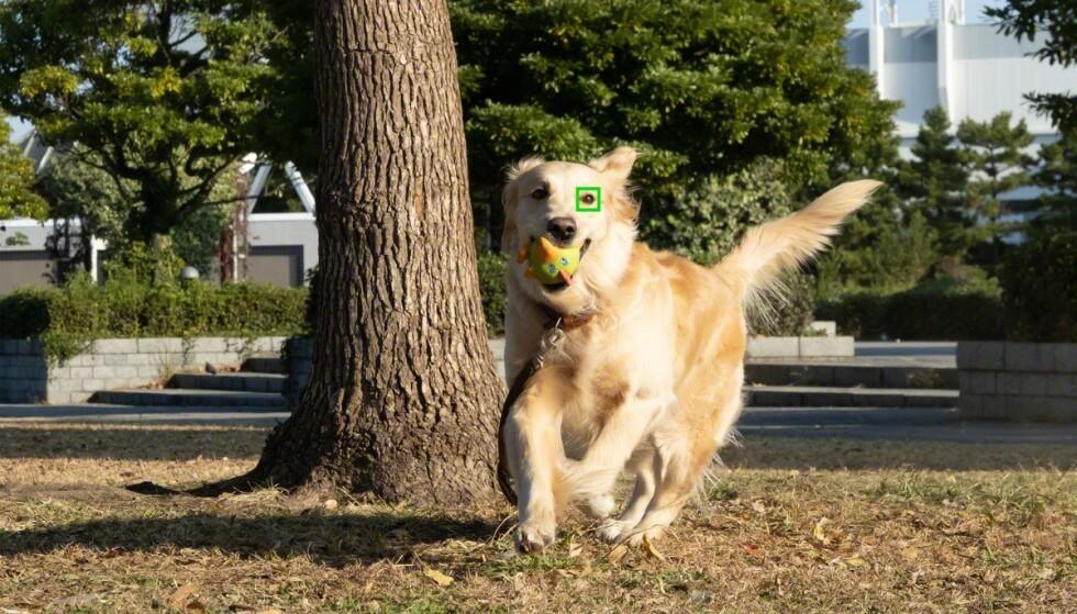 Som på selskapets Alpha-kameraer kan Sony-telefonene oppdage og fokusere på øyne, både på mennesker og dyr. Foto: Sony