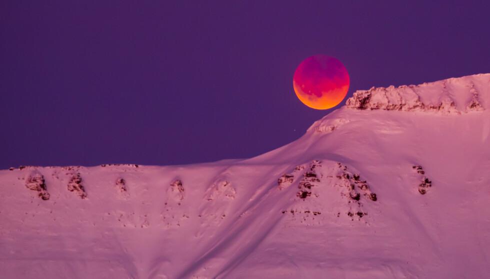 SUPERMÅNE OG TOTAL MÅNEFORMØRKELSE: Sett fra Svalbard i januar 2018. En total måneformørkelse oppstår når sola, jorda og månen er på linje i verdensrommet og månen ligger helt i skyggen fra Jorda. Når supermåne og total måneformørkelse forekommer samtidig kalles fenomenet litt uhøytidelig for supermåneformørkelse. Foto: Heiko Junge / NTB