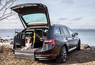 Kjæledyr i bilen i sommer?