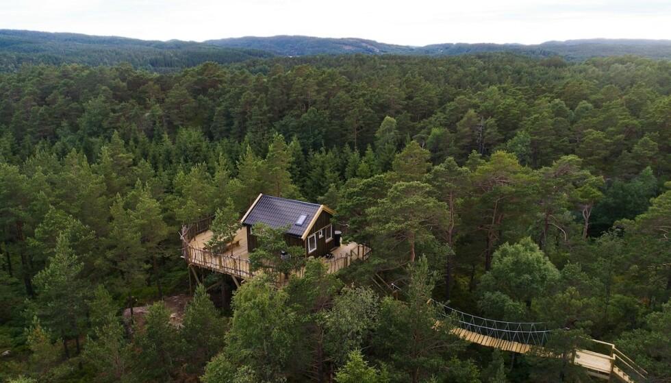 Svevende: Tretopphytta i Mandal er et av sommerens heteste utleieobjekt. Foto: airbnb
