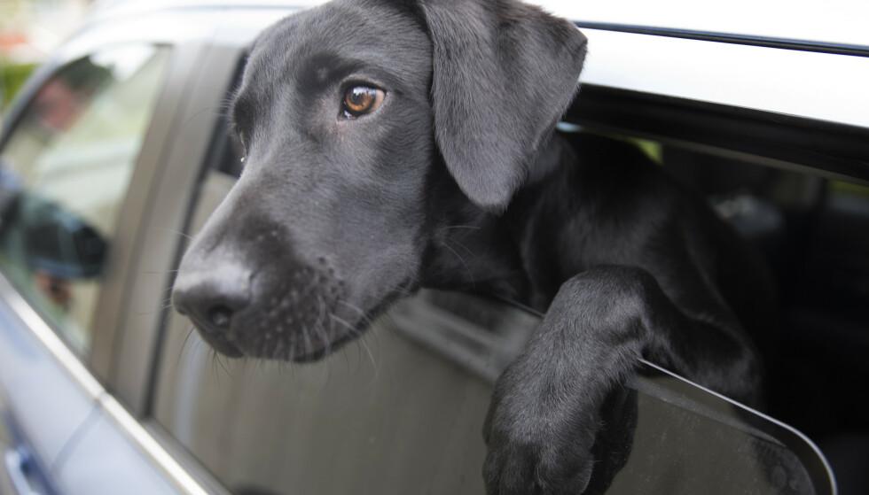 HUNDELOV: I et nytt forslag til hundelov ønskes det blant annet et kompetansekrav. Foto: Jon Eeg/NTB