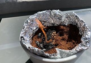Kaffegrut kan jage vekk myggen