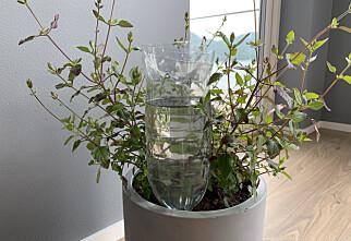 Tomflaske redder potteplanten