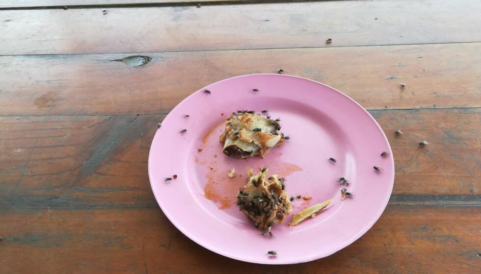 FLUEMAT: Spyfluer besøker ekskrementer før de kan oppsøke maten din. - Dette er et smittedyr, så vær oppmerksom, råder ekspert. Illustrasjonsfoto: NTB Scanpix.