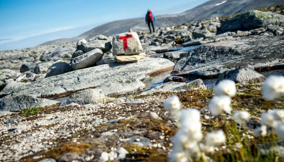 Til fjells: Snøhetta inviterer til flott utsikt og opplevelser og terreng helt utenom det vanlige. Foto: Monica Hägglund Langen/DNT