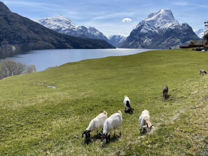 Fjord og fjell: Breimsvatnet og Kandalen i Nordfjord er som plukket ut av en reklamefilm. Foto: Odd Roar Lange/The Travel Inspector