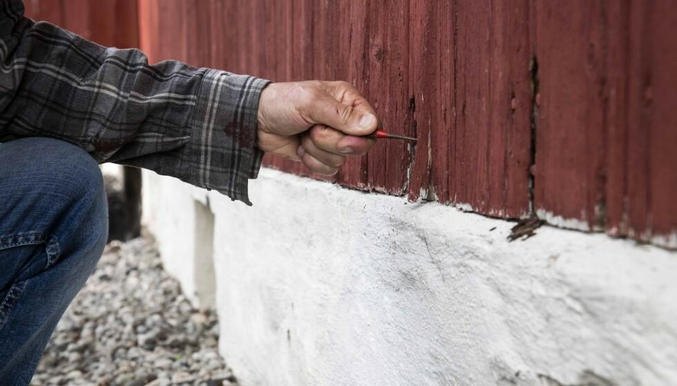 KNIVTRIKS: Bruk en kniv til å avdekke råteskader i hyttekledningen. Foto: Norsk Hussopp Forsikring.