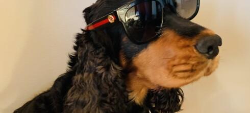 Bikkja spiste opp solbrillene