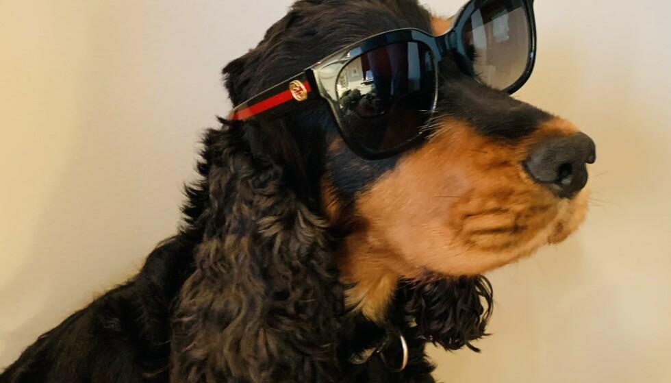 SPISTE KJÆRESTENS BRILLER: Og det gikk bra med hunden etter det brillefine måltidet. Foto: Gjensidige
