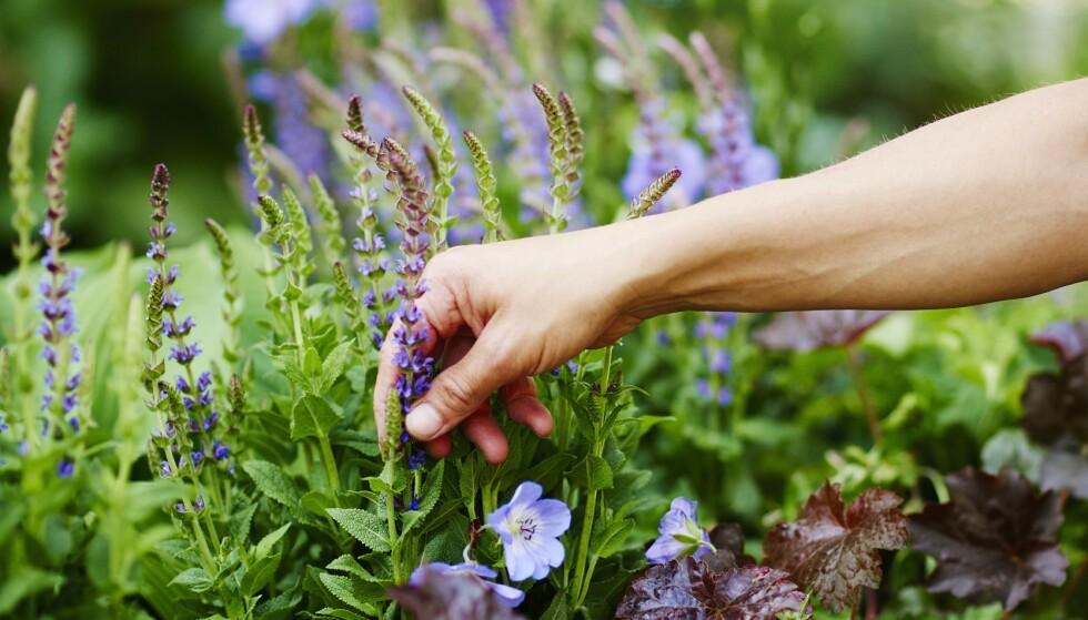 HØST: Det lønner seg å plante i hagen nå, før høsten og vinteren kommer. Foto: Plantasjen