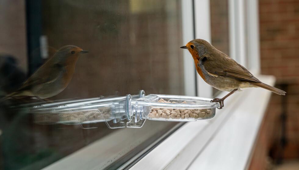 VIL HA SLUTT PÅ DETTE: En blokkbeboer klager på at en annen beboer mater fugler på egen balkong, samt strør fuglemat under busker og trær i fellesarealet daglig. Er det greit? Se hva advokaten svarer i saken under. Foto: Shutterstock/NTB