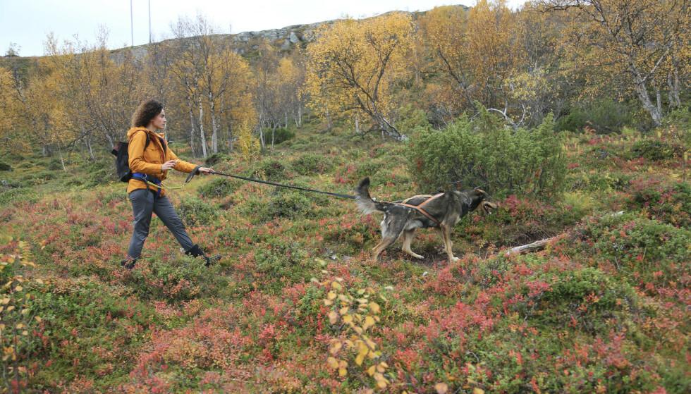 Ut på tur: Høsten maler naturen i nye farger. Foto: Odd Roar Lange/The Travel Inspector