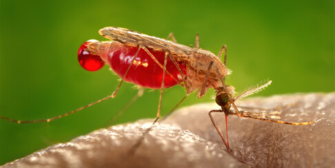 Image: Dette holder myggen unna