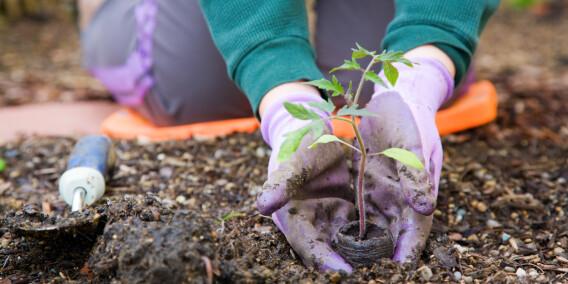 Image: Dette dreper plantene om våren