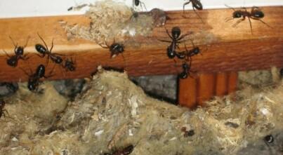 Image: Lager reir i tak og vegger