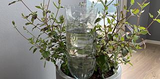 Image: Tomflaske redder potteplanten